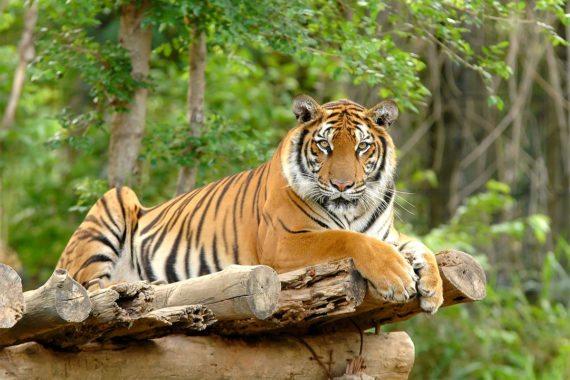 Zoo & Tierpark - Ausflugsziel im Salzburger Land